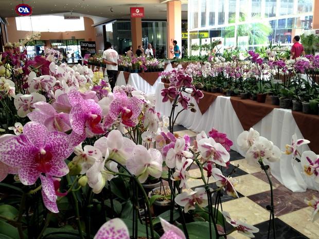 Orquídeas estarão à venda durante a exposição por preços entre R$ 8 e R$  15 (Foto: Mariana Ignácio/Divulgação)