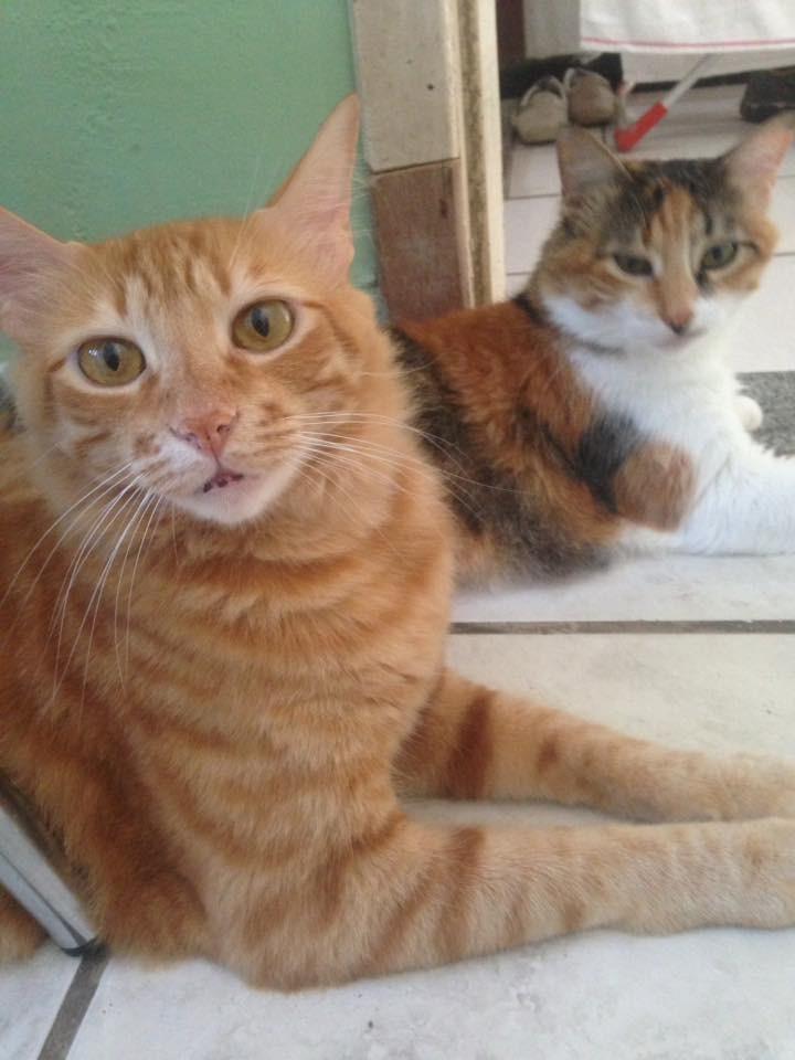 Penny e Gohan (Foto: Elisangela De Souza Barroco/ Arquivo Pessoal)