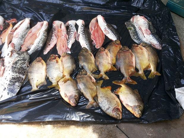 Entre os peixes estão pacu, filé de pintado e cachara (Foto: Assesoria/PM)