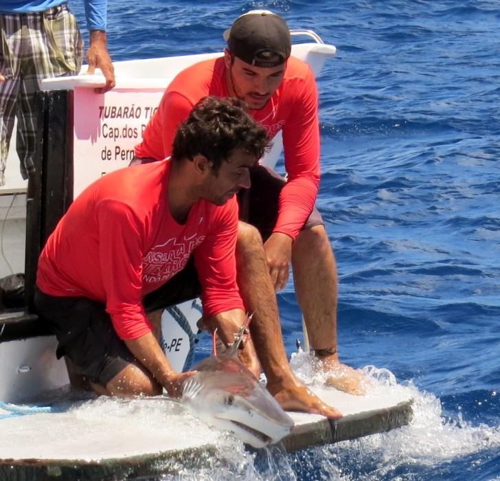 Pesquisa Tubarão Noronha