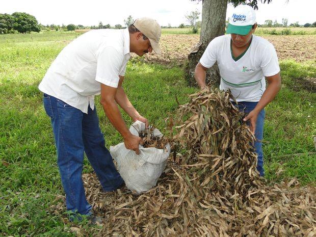Agricultura orgânica é potencializada em Propriá (Foto: Divulgação)