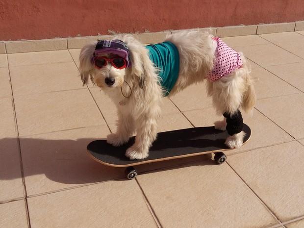 A cachorra Pérola Carolline sobre o skate. (Foto: Alex Araújo/G1)