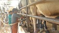 Programa oferece orientação técnica de graça para produtores de leite