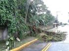 Chuva provoca queda de árvores e desabamento de muros em Joinville