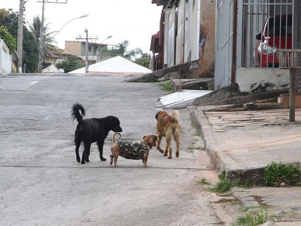 Cachorros em rua da Candangolândia, região administrativa do Distrito Federal (Foto: Toninho Tavares/Agência Brasília)