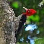 Flagrantes da natureza em fotos e vídeos (Rudimar Narciso Cipriani)