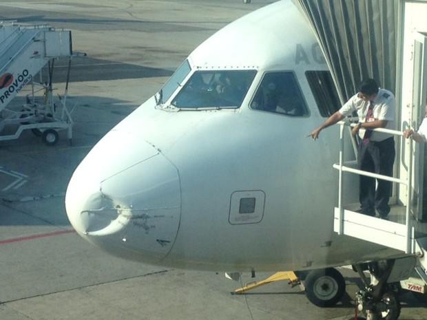 Urubu teria atingido parte dianteira do avião (Foto: Isabela Scalabrini/ TV Globo)