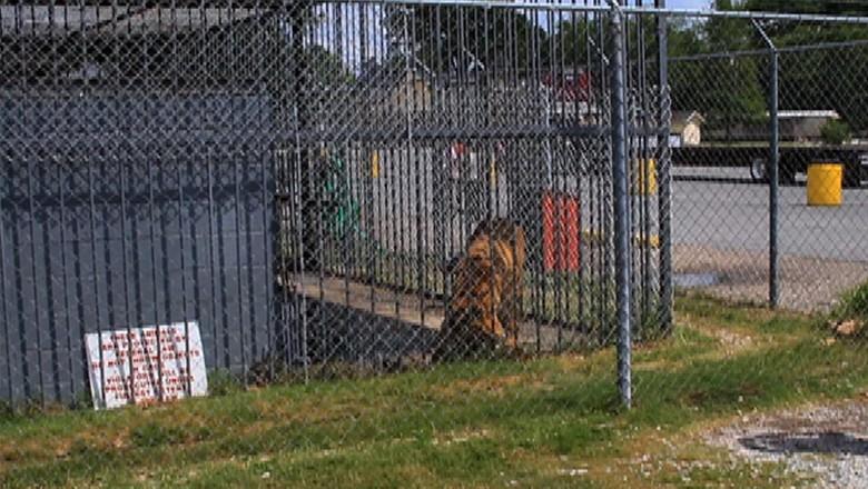 Animal está enjaulado há 14 anos (Foto: Savetony.com)