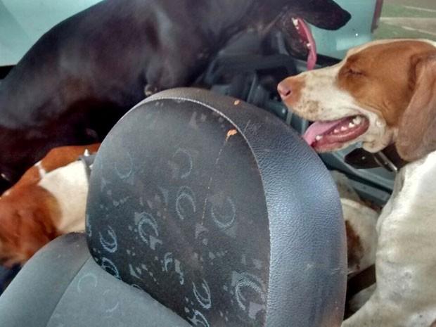 Seis cachorros foram apreendidos com a dupla (Foto: Polícia Ambiental/Cedida)