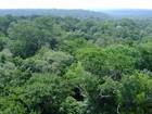 ONU afirma que Brasil é deficiente na gestão das unidades de conservação
