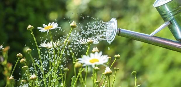 regador, economia de água, 940x400, jardim, água (Foto: ThinkStock)