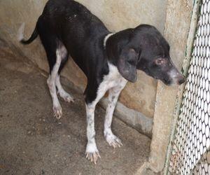 Cachorro na Zoonose de Aracaju (Foto: Marina Fontenele/G1 SE)
