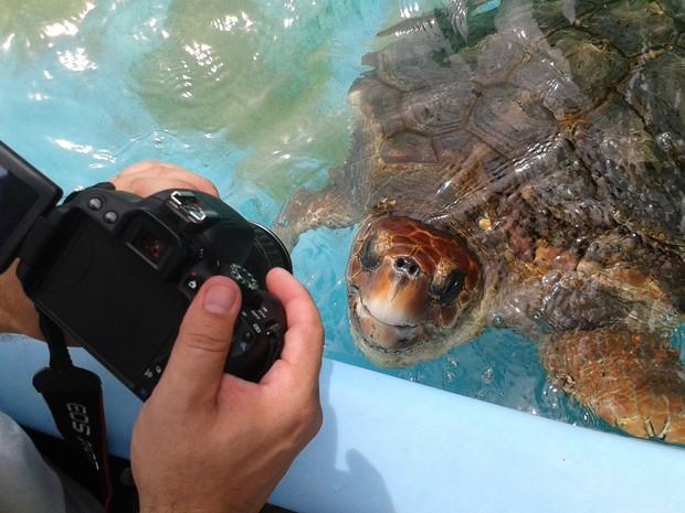 Tartarugas são visitadas e colaboram para conscientização (Foto: Spry Vídeo/Divulgação)