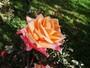 A Primavera chegou e o Viver Bem dá dicas de decoração com flores