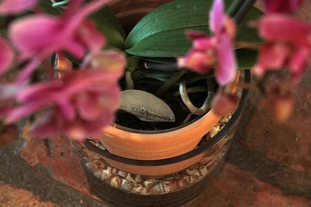 5-suculentas-em-tacas-de-sobremesa (Foto: Reprodução/Pinterest)