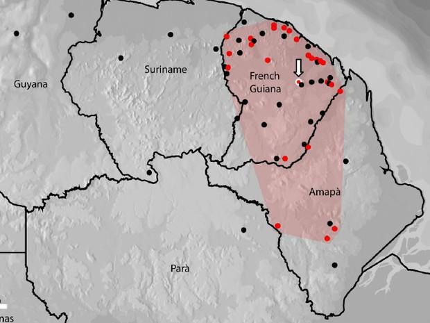 Hypsiboas diabolicus, perereca, espécie, Amapá, Guiana Francesa, Iepa, (Foto: Iepa/Divulgação)