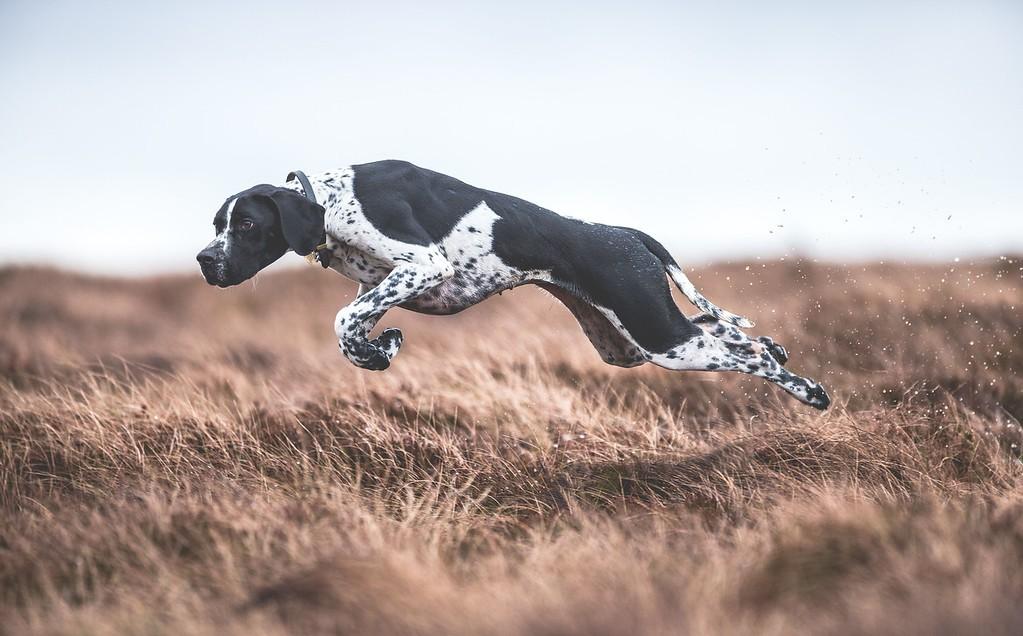 A cachorra Rita (Foto: Sarah Caldecott)
