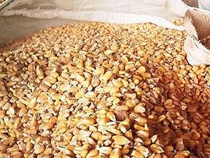 saca de milho (Foto: Leandro J. Nascimento/G1)