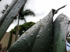 Inmet alerta para perigo em MS por causa de chuvas intensas na segunda