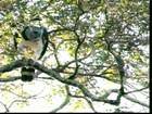 Considerada rara, maior águia brasileira é avistada em parque no RS