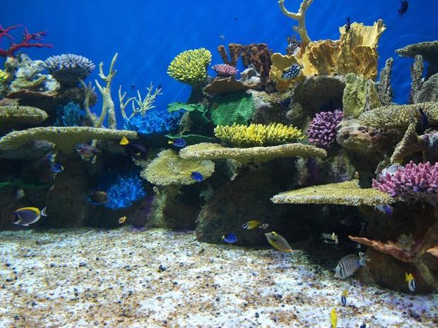 Ingressos antecipados para o AquaRio dará direito a visitação ilimitada por um ano (Foto: Divulgação/AquaRio)