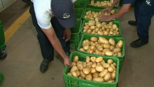 Sesc recolhe batatas que seriam jogadas fora e distribui para entidades
