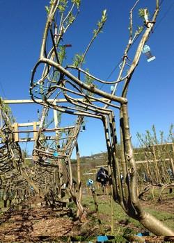 Cadeiras na fase de fortalecimento dos troncos. Esse processo pode levar até alguns anos (Foto: Divulgação)