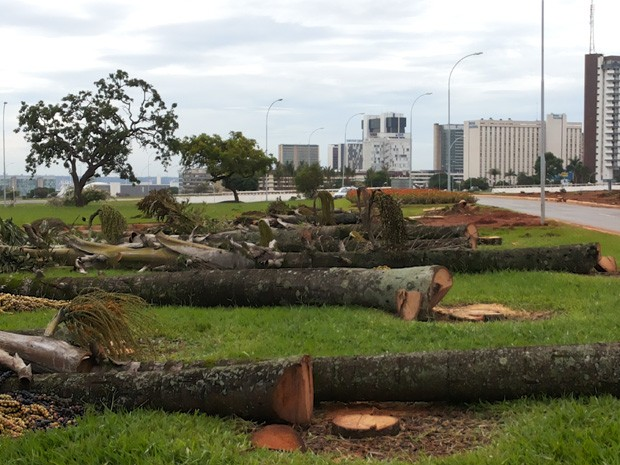 Técnicos da Novacap retiram 26 palmeiras na região central de Brasília (Foto: Aldair Fernando/G1)