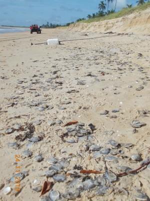 Centenas de peixes foram encontrados mortos ao longo de 400 metros de praia (Foto: Divulgação/Ong Pat Ecosmar)