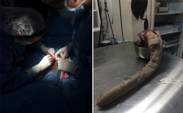 Jiboia-constritora de 1,8 m precisou ser operado com urgência para retirar toalha do corpo (Foto: Divulgação/BluePeral Veterinary)