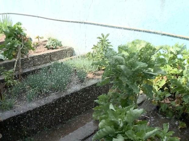 Horta é regada com água captada da chuva (Foto: Reprodução/ TV Gazeta)