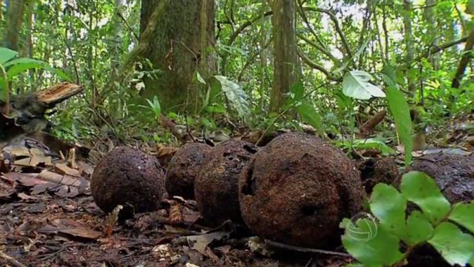 Equipe do É Bem Mato Grosso foi em busca da castanha do Brasil (Foto: TV Centro América)