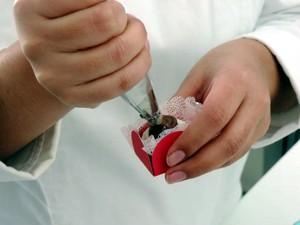 Para rechear, utilize um saco com bico de confeiteiro (Foto: Emilio Botta/G1)