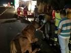 Motociclista fica ferido após atropelar mula em rodovia