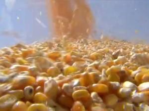 GLOBO RURAL_preço do milho (Foto: TV Globo)