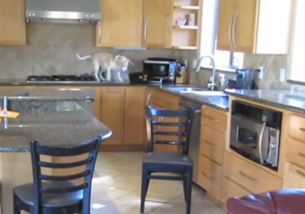 Lucy conseguiu subir na pia e retirar nuggets que estava assando no forno (Foto: Reprodução/YouTube/Rodd Scheinerman)