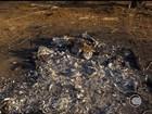 População consome carne sem inspeção sanitária no interior do Piauí