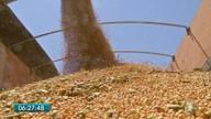 Colheita da soja começa na próxima semana em Mato Grosso do Sul
