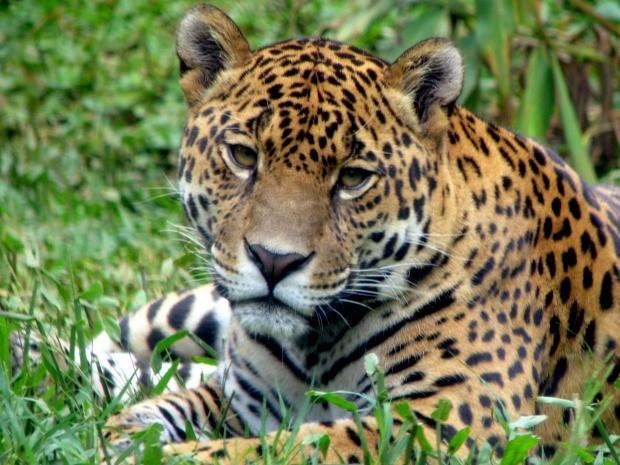 Zoo de Gramado é uma das atrações (Foto: Divulgação/Prefeitura de Gramado)