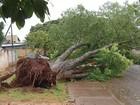 Chuva e ventania de 56 km/h causam novos estragos em Dourados, MS
