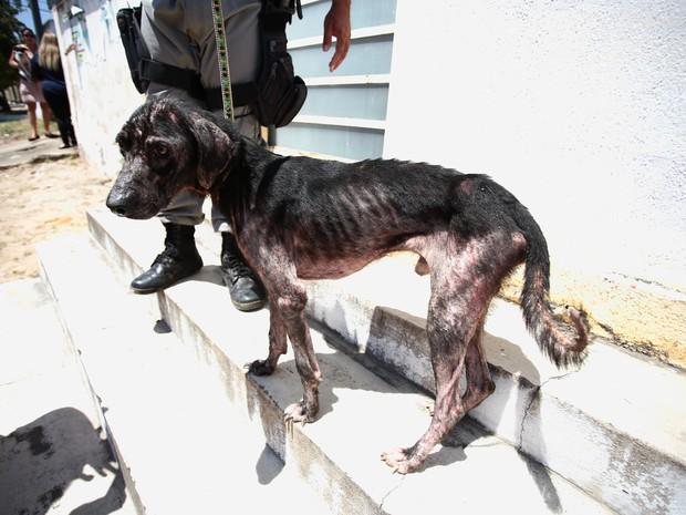 Macho foi resgatado e está desnutrido.  (Foto: Jonathan Lins/G1)
