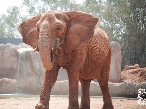 Foto de um dos elefantes do zoológico de Rabat, no Marrocos (Foto: Reprodução G1/ Rabatzoo)