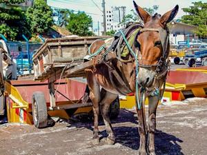 Veículos de tração animal estão proibidos de cirular em Vitória (Foto: Arquivo/ Secom)