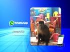 Macaco aparece em lanchonete e vira atração em Araçatuba; veja vídeo