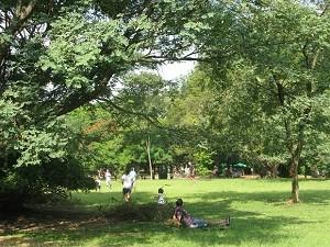 Parque do Ibirapuera foi inaugurado em 1954, em comemoração ao centenário de SP. (Foto: Leonardo Neiva/G1)