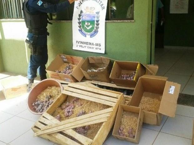 Aves foram abandonadas em caixas e bacias no meio do mato  (Foto: (Foto: Divulgação/Polícia Militar))