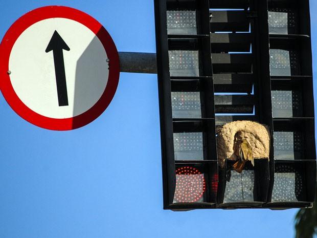 Passarinho joão-de-barro constrói seu ninho em um semáforo de trânsito no centro de Florianópolis. (Foto: Eduardo Valente/Futura Press/Estadão Conteúdo)