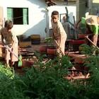 Projeto social ensina rotina  nas fazendas para crianças  (Reprodução/TV TEM)