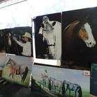 Pintor retrata paisagens em acampamento (Daniel Bittencourt/G1 RS)