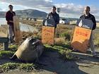 Elefante-marinho 'trava' trânsito após tentar cruzar rodovia na Califórnia